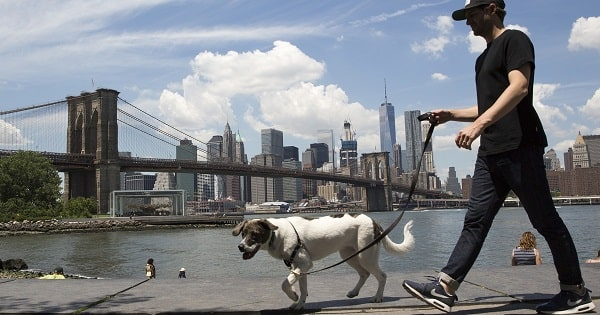 New York for Dogs